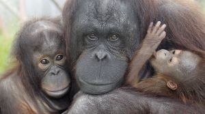Visit Monkeyworld for a great day out