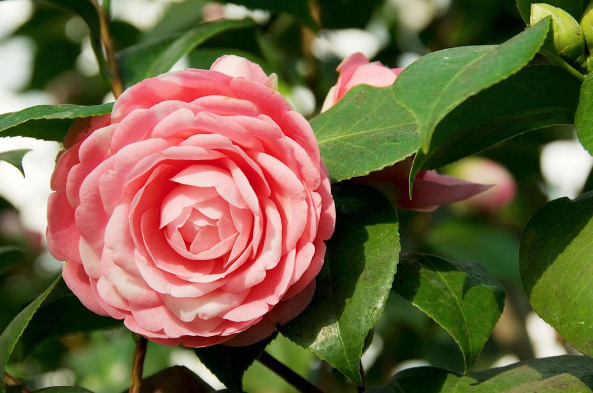 Какой самый красивый цветок в мире фото