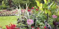 RHS Summer Shows to go ahead as planned following latest government announcement with additional covid measures in place