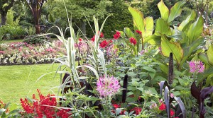 RHS Plant Day 10th September 2014