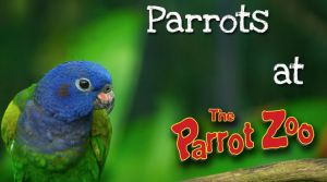 The Parrot Zoo