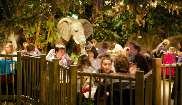 Rainforest Cafe up for two awards