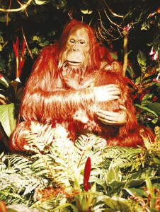 rainforestcafe_orangutan