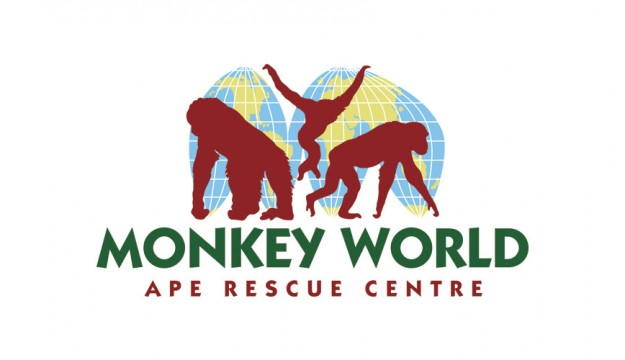 Monkey World – Ape Rescue Centre: Expect More Than Just A Zoo!