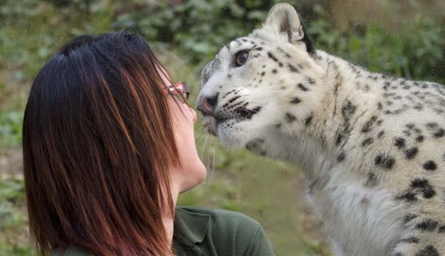 Jody and snow leopard by Stella Kent