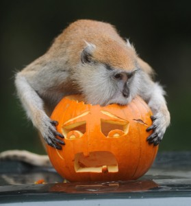PUMPKIN_ANIMALS_3