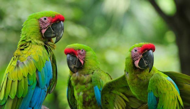Parrot Zoo Buffon Macaw