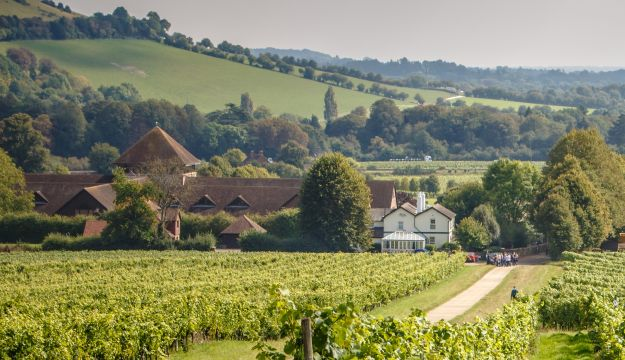 Denbies Wine Estate, England's Largest Vineyard In the Heart of the Surrey Hills