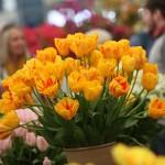 RHS Malvern Floral Marquee