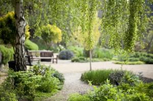 Ventnor Botanic 1
