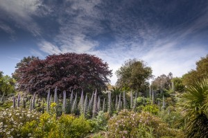 Ventor Botanic 4