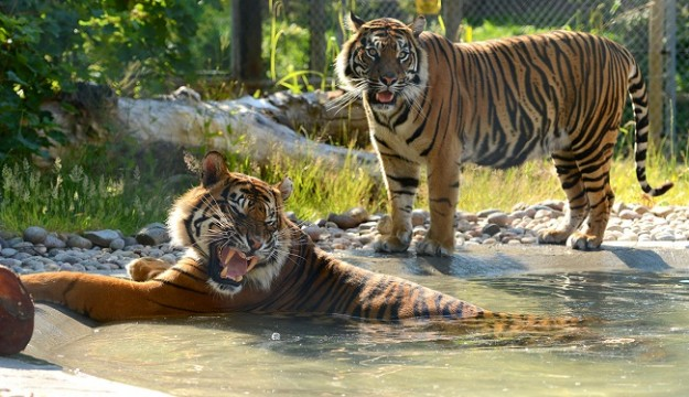 See an array of fascinating wildlife at Drayton Manor Zoo