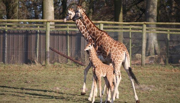 Xmas Giraffe explores the great outdoors