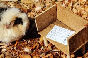 Guinea Pig and ballot paper at Longleat
