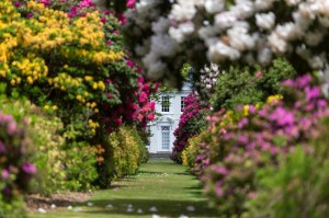 The Long Walk - a 200m pathway lined with dazzling azaleas, towering rhododendrons and stunning magnolias and camellias