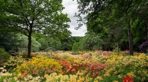 Coach tours invited to visit the stunning Stody Lodge Gardens throughout May 2018