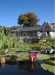 Ventnor Britains Hottest Garden