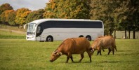 Woburn Safari Park – The wild is closer than you think!
