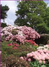 Ambervalley Gardens