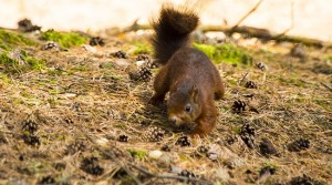 The Quest for the Red Squirrels: Hibernating Groups Invited to Investigate, Visit Southport Welcomes Tour Planners 23-25 September