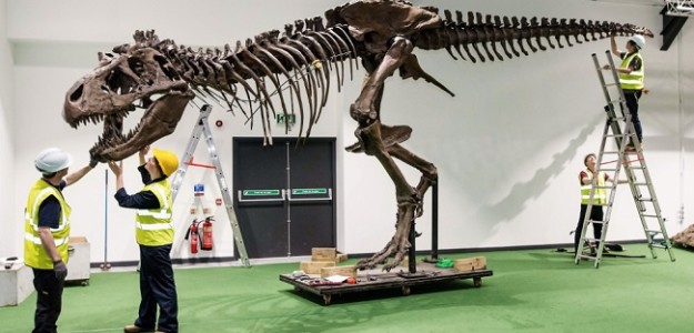 Technicians bring T.Rex roaring back to life at Longleat