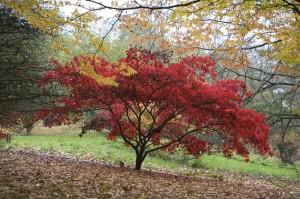 Batsford Arboretum Autumn