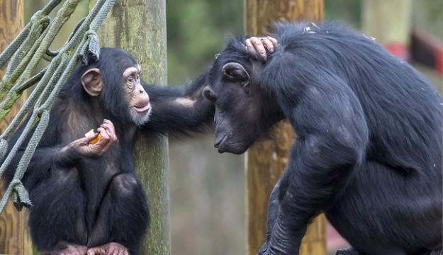 Visit Europe's only orang-utan nursery, at Monkey World!