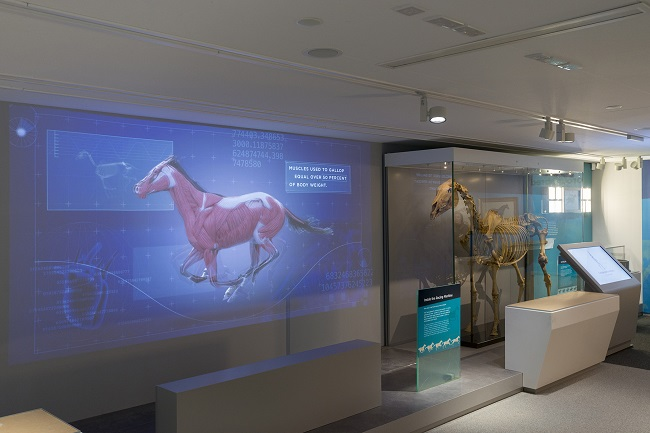 Discover Newmarket Gallery of Thoroughbred