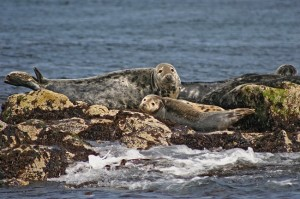 Forth Boat Tours Seals