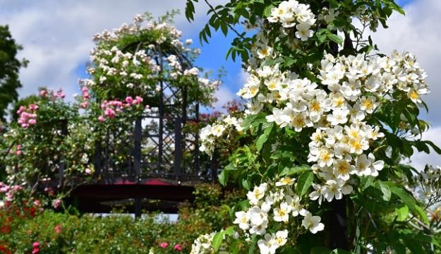 Peter Beales Garden Centre