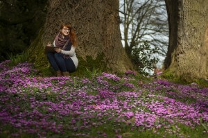NT-Killerton flowercount