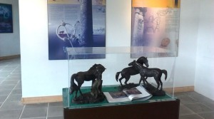 In Ireland ? Then visit Dartfield Equestrian and Heritage Centre