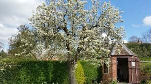 Hill Close Gardens, Warwick – A unique set of Victorian detached gardens.