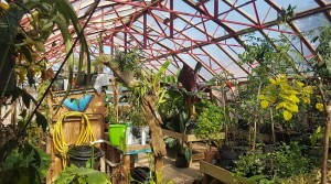 Stratford Butterfly Farm to re-open on 4 July!