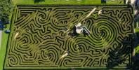 Short Back and Sides for Hedge Maze