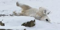 Animals at Yorkshire Wildlife Park enjoy a snow day